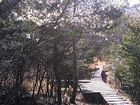 湿地には木道があります。