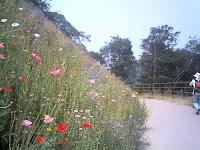 椿の小径に咲くワイルドフラワー