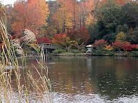 かえで池から見る紅葉