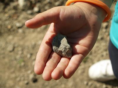 Fóssil marí de petxina