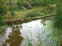 Una altre bassa del Molí de Baix