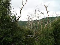 Bosc cremat al Torrent de L'Ullar