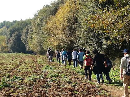 Arran dels camps de Can Bruguera