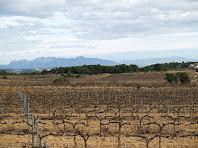 Vinyes de Can Grau de la Muntanya amb la masia a la dreta. Al fons veiem Montserrat i Sant Llorenç del Munt