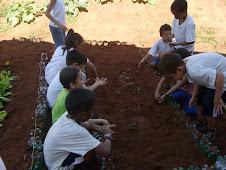 Projeto: Plantas