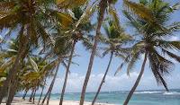 cocotier et plage de sable blanc