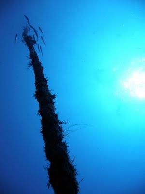 La surface, prise à 45 mètres de profondeur