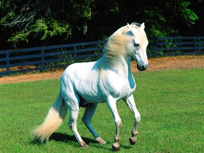 wallpaper horse. horses wallpaper horse