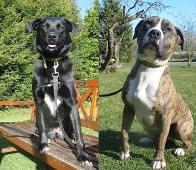 Dogs Trust: June 2008 2011