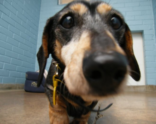 Dogs Trust: Diary of a