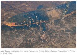 Fishes Of Andhra Pradesh And India