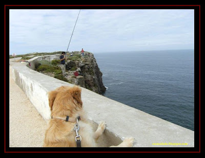 Golden Retriever in Sagres