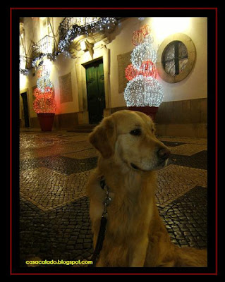 Golden Retriever em Loulé, Algarve