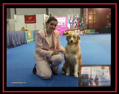 Pastor Australiano na Exposição Canina Internacional do Norte