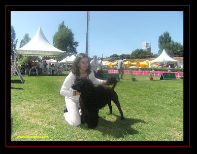 portuguese water dog in lisbon dog show