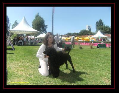 cão de água português na exposição de lisboa