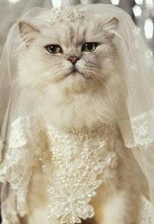 cat fiancee