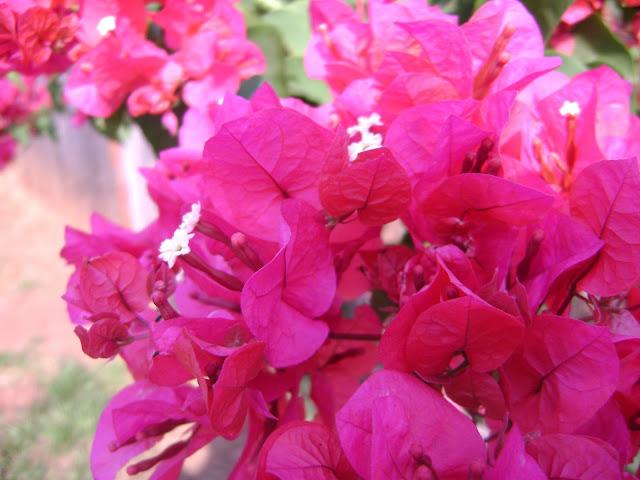 GERBERA Instant Download clipart boda flores por