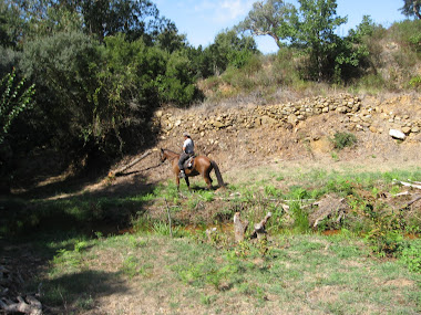 Vor der Kulisse einer Natursteinmauer