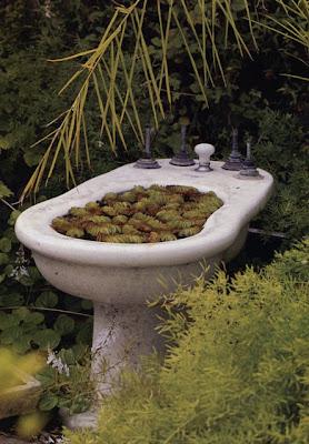 Jardines de cactus y suculentas opuntias cereus y jardin for Jardines con cactus