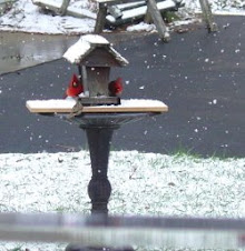 Back yard Bird Feeder
