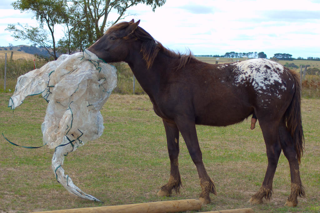 paint clydesdale - photo #18