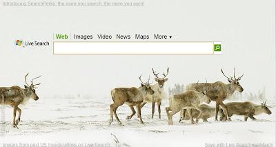 Live Search pour les fêtes de Noël