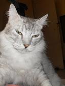 o gato Léo da ciganinha