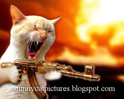 Funny Cat Picture With Guns