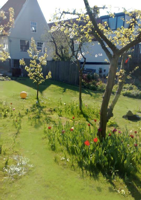 Authentieke dijktuin, lente - fruitbomen met tulpen