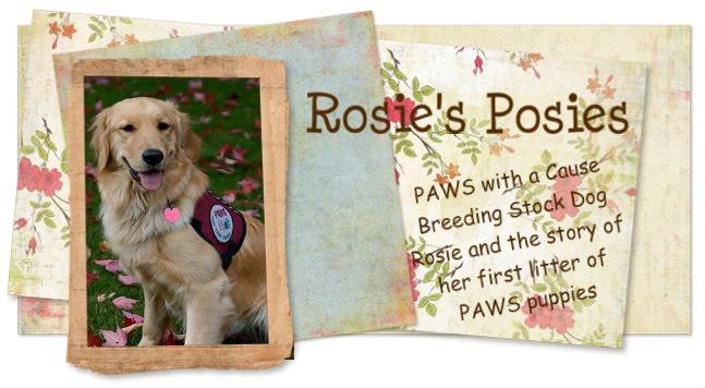 rosie's blog