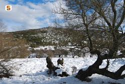 Monte Cresia