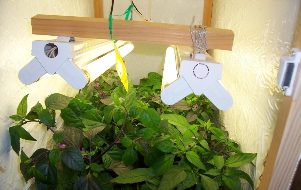 chili farmer mein chilipflanzen vorzucht schrank. Black Bedroom Furniture Sets. Home Design Ideas