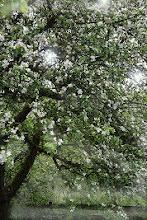 Bäume sind Gedichte,