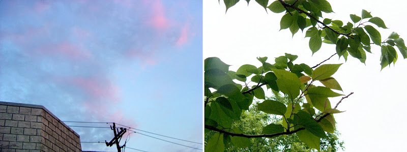 pink clouds and leaves