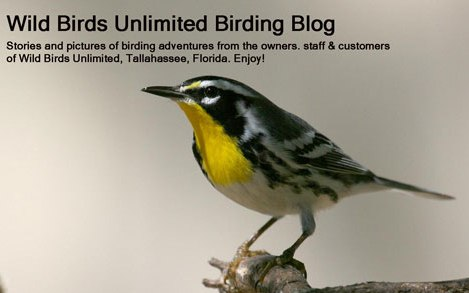 WBU&#39;s BIRDING BLOG