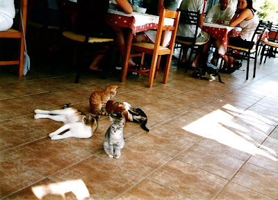Cool cats in Crete