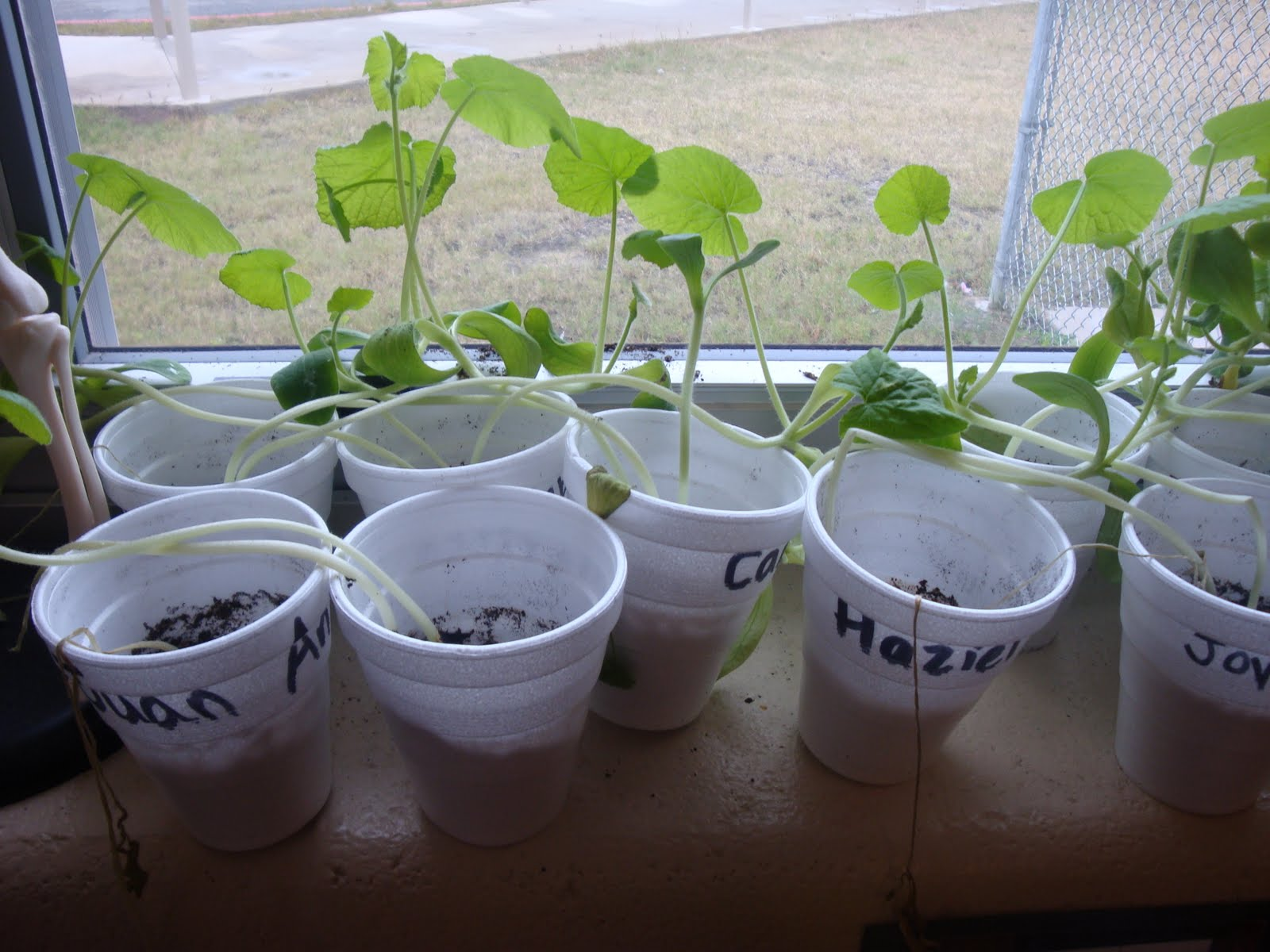 Kids planting seeds in cups