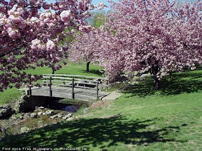 Ручей и мостик в саду.
