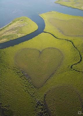 На берегу реки растительность создала природное сердце мира из растений. Фото креатив красивый пейзаж на берегу реки. Причуды ландшафта нашей планеты. Природный ландшафтный дизайн берега реки.