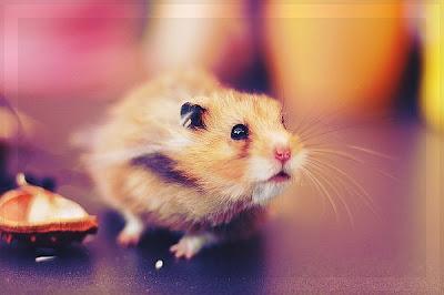 Маленькие комочки шерсти фото прикол. Мышонок с забавной мордашкой.