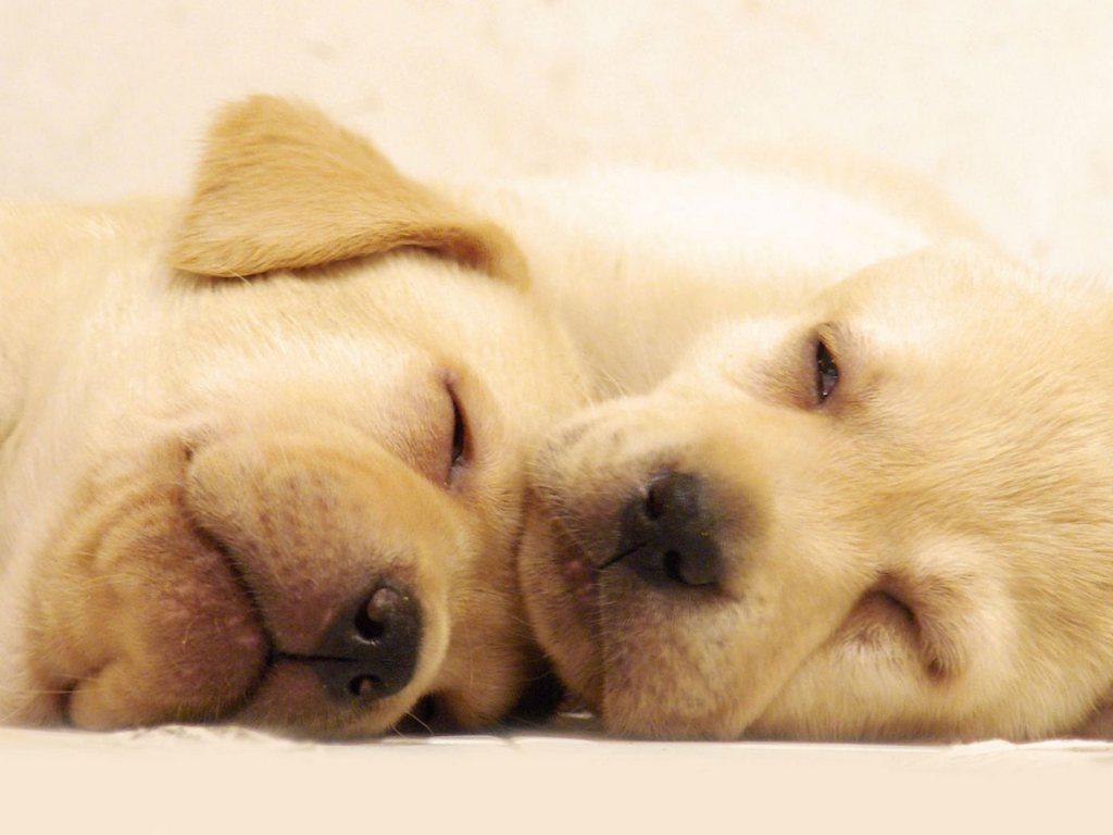 Foto Cuccioli Cani Di Razza