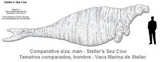 Steller's sea cow