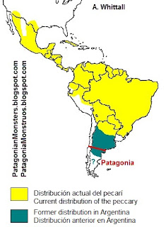 Peccary distribution