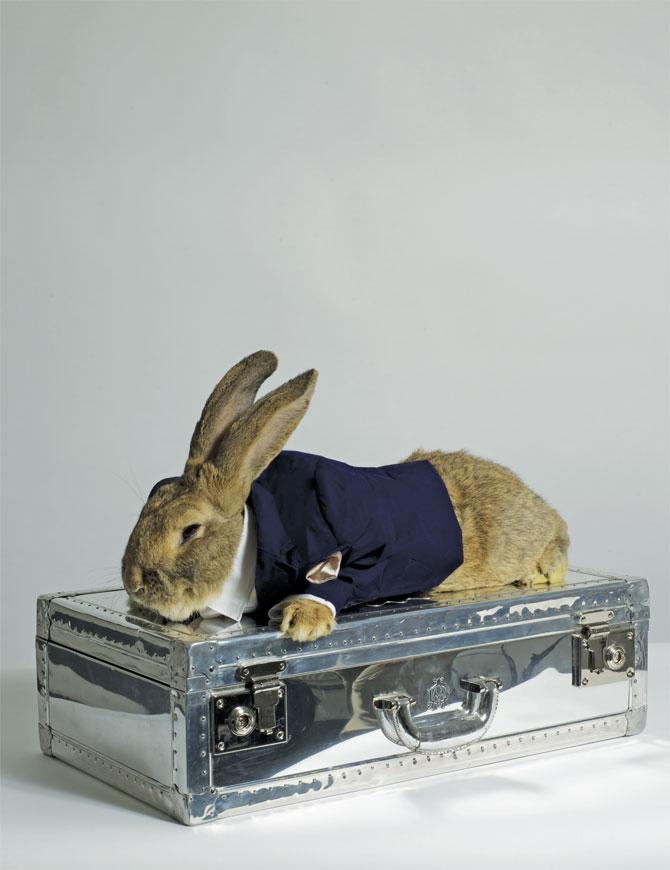 http://3.bp.blogspot.com/__wgTdCCrfeY/S8aPbSFpigI/AAAAAAAAGBA/PNMl8RvKPuQ/s1600/rabbit-on-briefcase.jpg