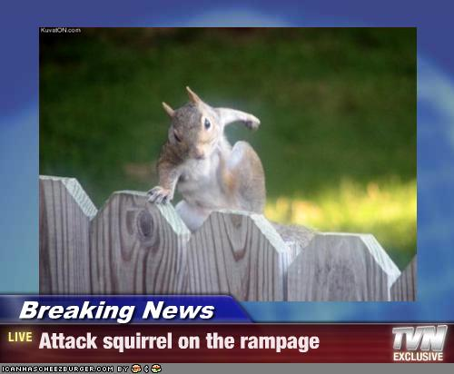 sql bergheim follies evil attack squirrel of death