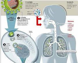 A trajetória da gripe H1N1