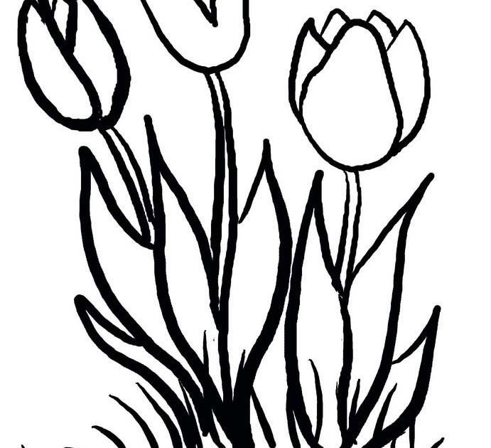 Dibujos para imprimir y colorear: Dibujo de Tulipanes para imprimir ...