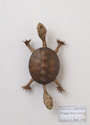Gensou Hyouhon Hakubutsukan - Strange China Turtle