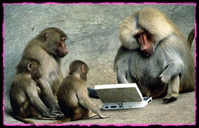 monkey on laptop